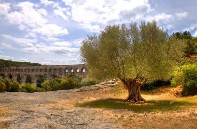 Sortie du covid aux Pompes funèbres des oliviers