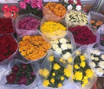 Nos Fleurs de TOUSSAINT