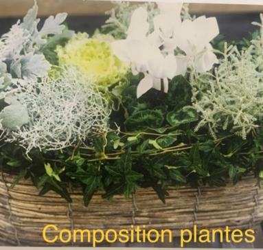 COMPOSTION DE PLANTES